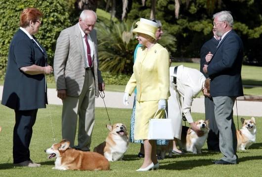 Queen Elizabeth II and her corgis ( AFP PHOTO / Torsten BLACKWOOD )